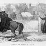 Civil War Women Spies for the North