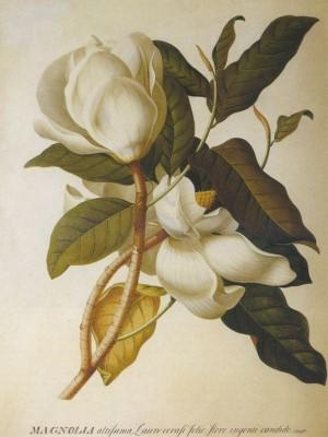 Jane Colden discovered the gardenia